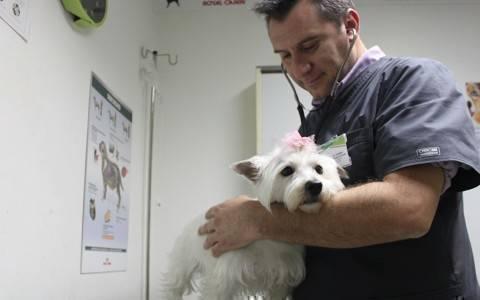 Dr-Pet
