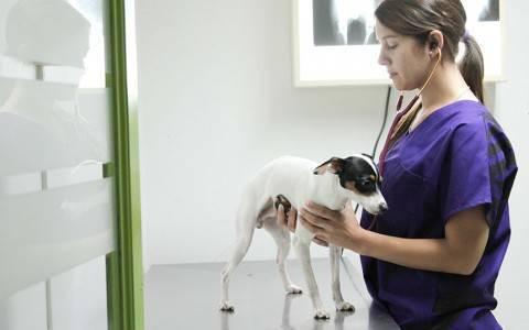 Dr.-Pet