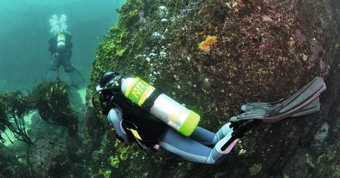 DIVING-BUCEO