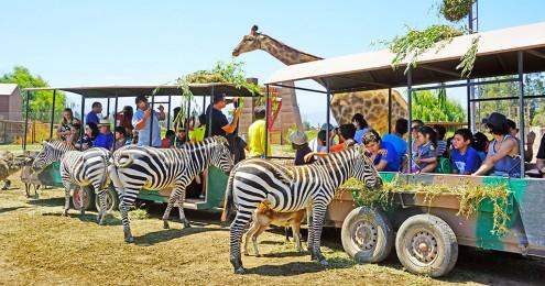 Parque-Safari-1
