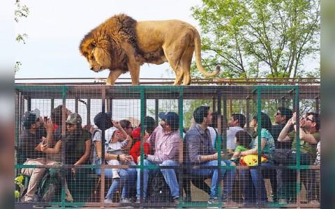 Parque-Safari-2